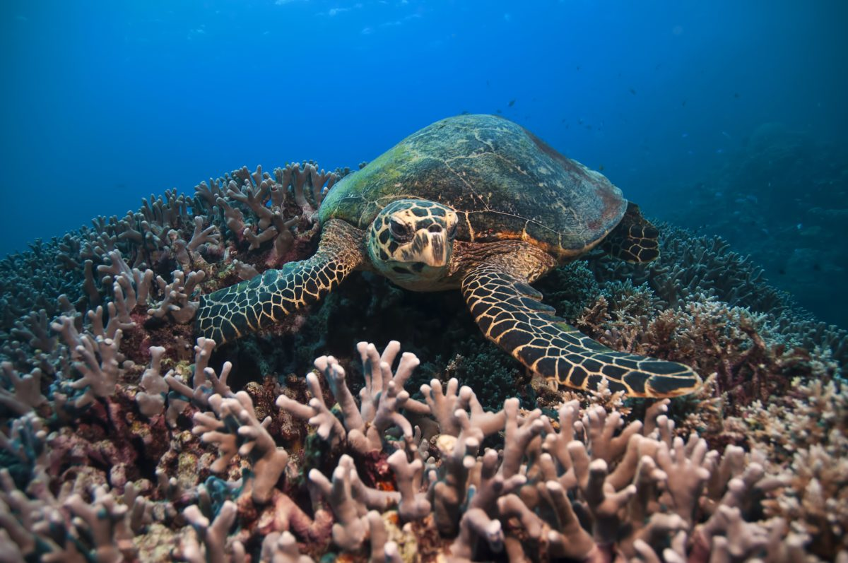 Rights of the Great Barrier Reef